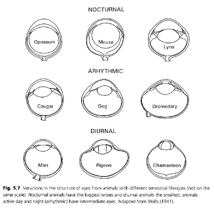 EYE DESIGN BOOK, BIOLOGICAL EYE DESIGN, , eyech2-abc.html
